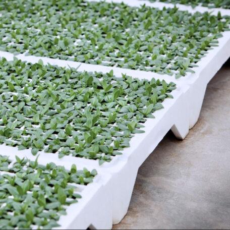 Sustainability-Seedlings-BEWI